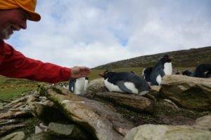 Pingvinelskerens paradis - Falklandsøerne