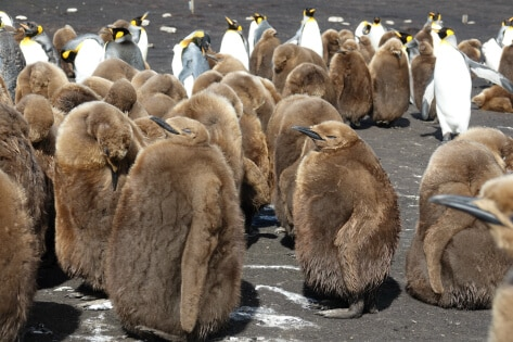 leif-stubkjaer-prinse-pingviner-falkland-foredrag-foredragsportalen